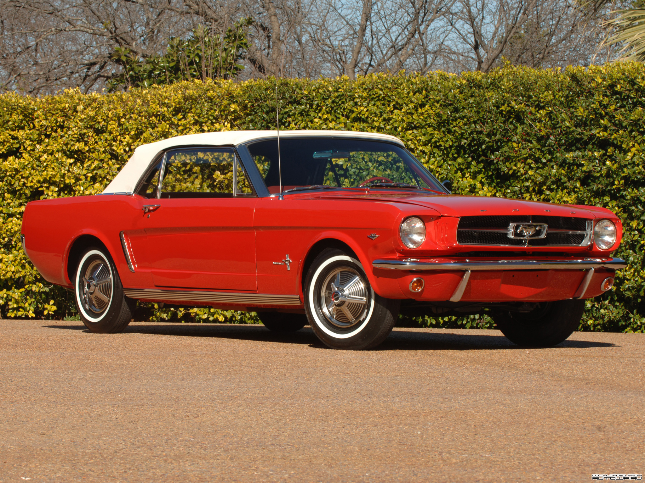 Amazing 1964 Ford Mustang Pictures & Backgrounds