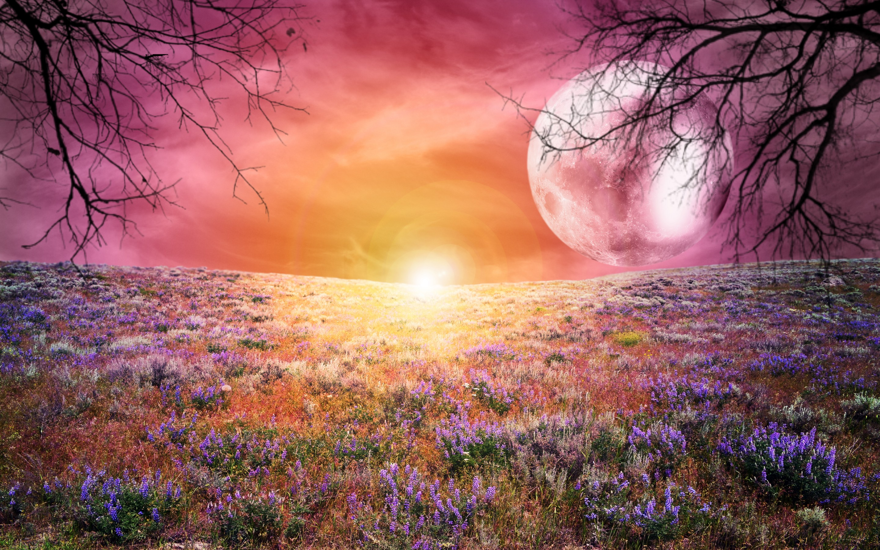 Nice Images Collection: A Dreamy World Desktop Wallpapers