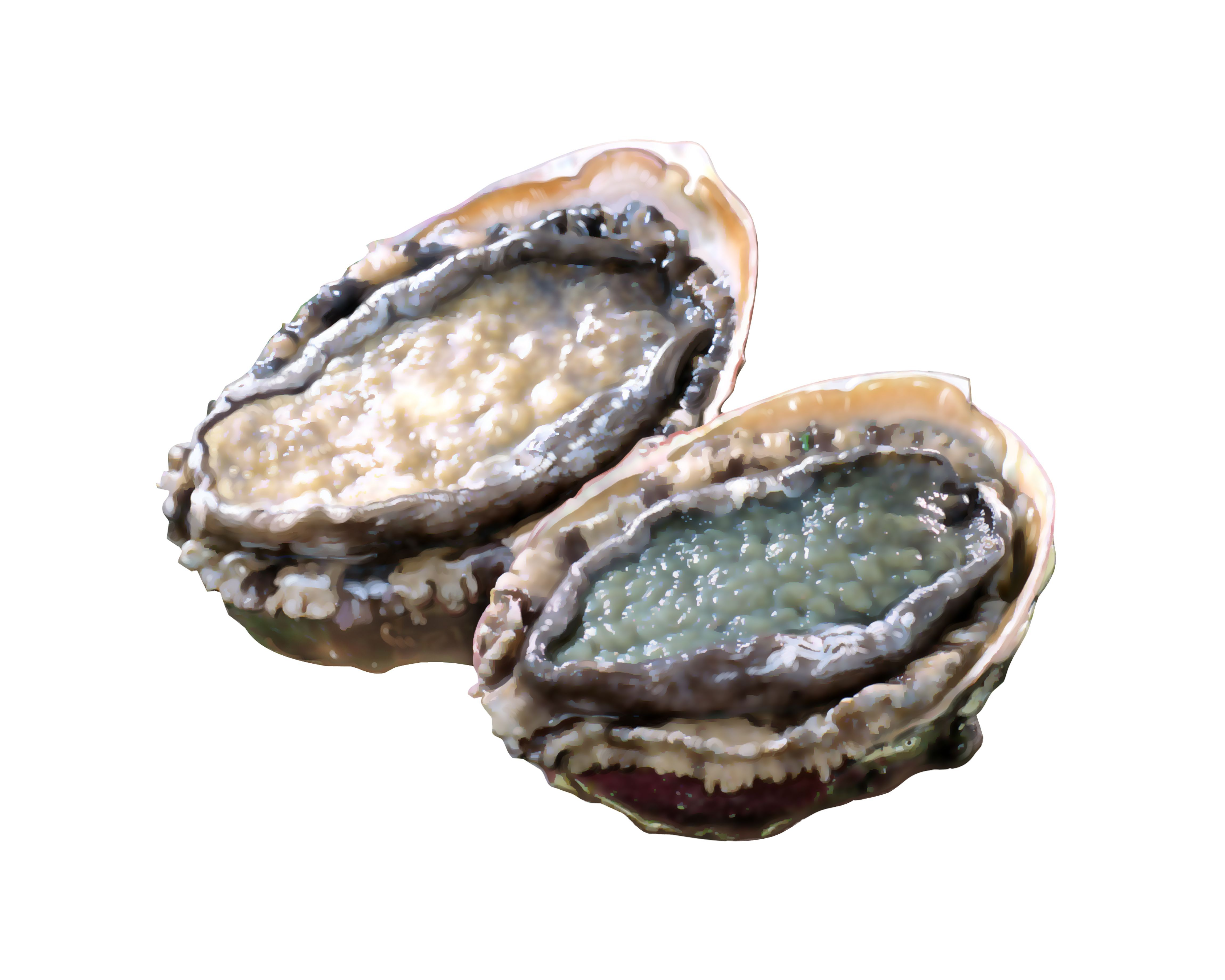 Abalone Pics, Video Game Collection