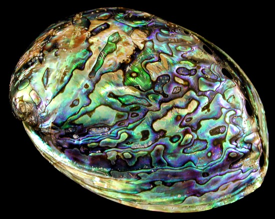 Abalone Backgrounds on Wallpapers Vista