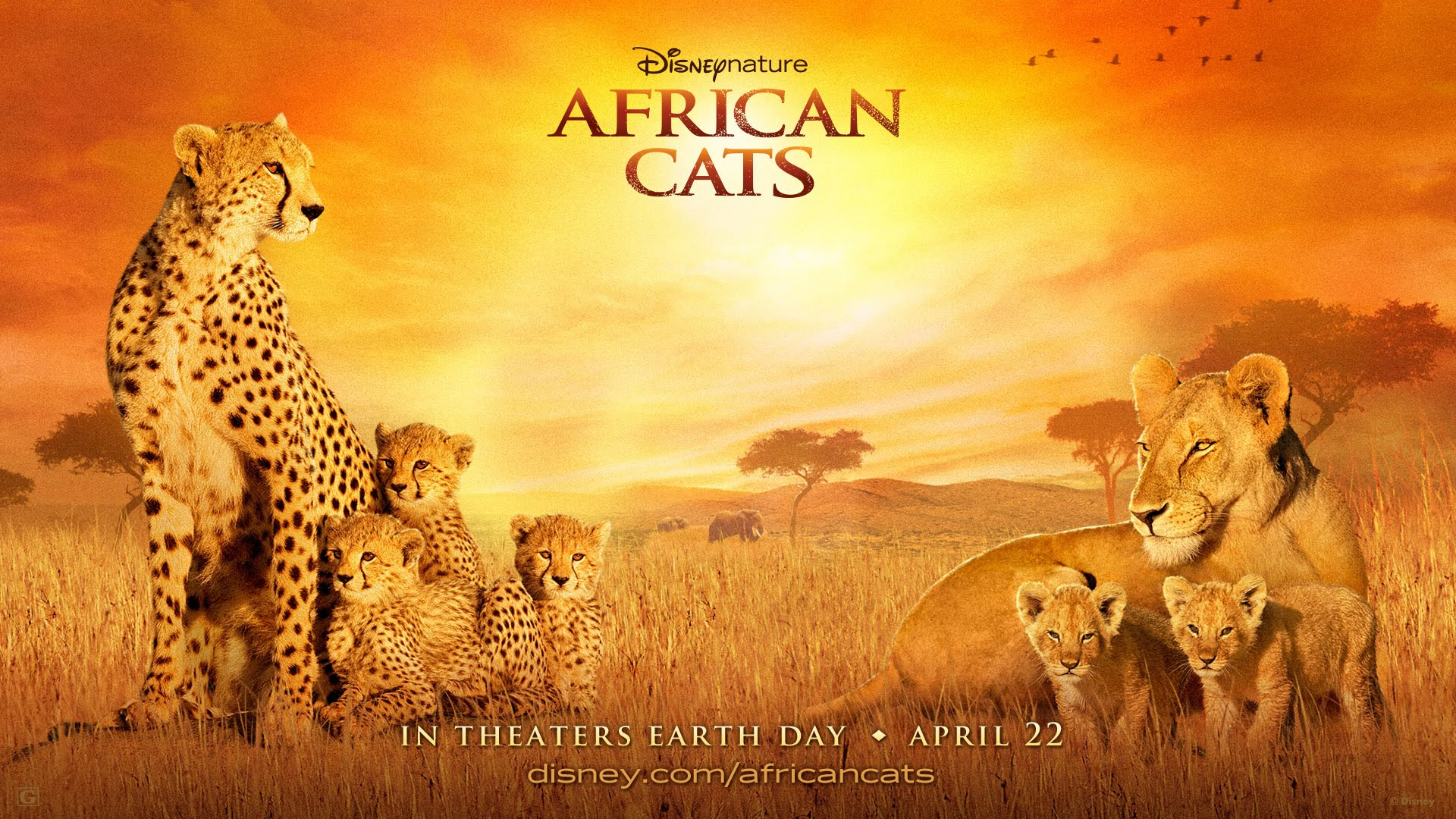 Lion cat disneynature documentary film png, clipart, 2011, african.