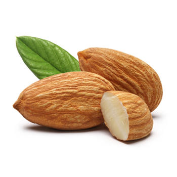 Almond High Quality Background on Wallpapers Vista