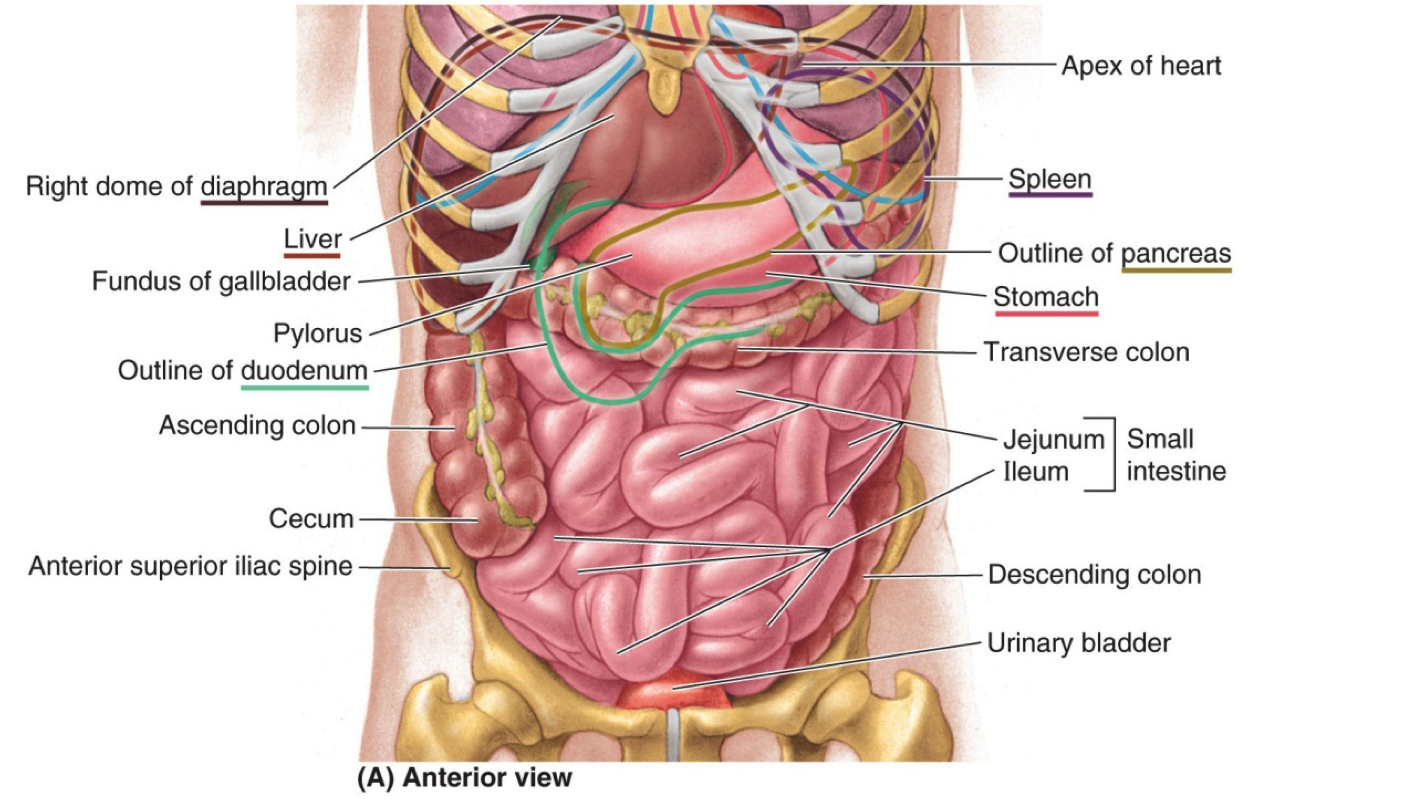 Anatomy Pics, Artistic Collection