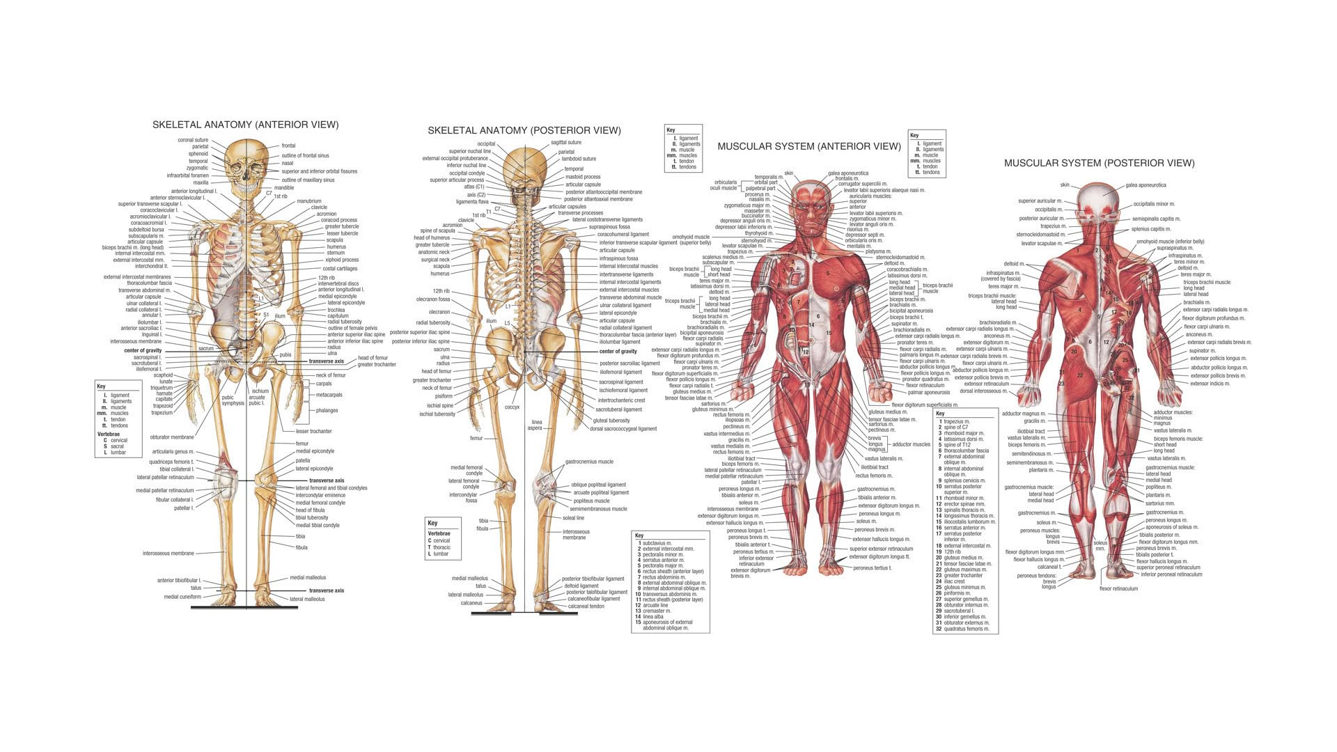 1920x1080 > Anatomy Wallpapers