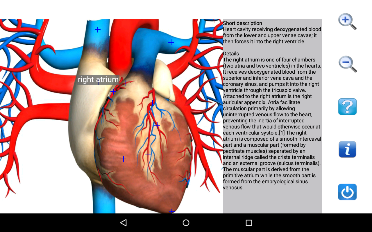 Nice Images Collection: Anatomy Desktop Wallpapers