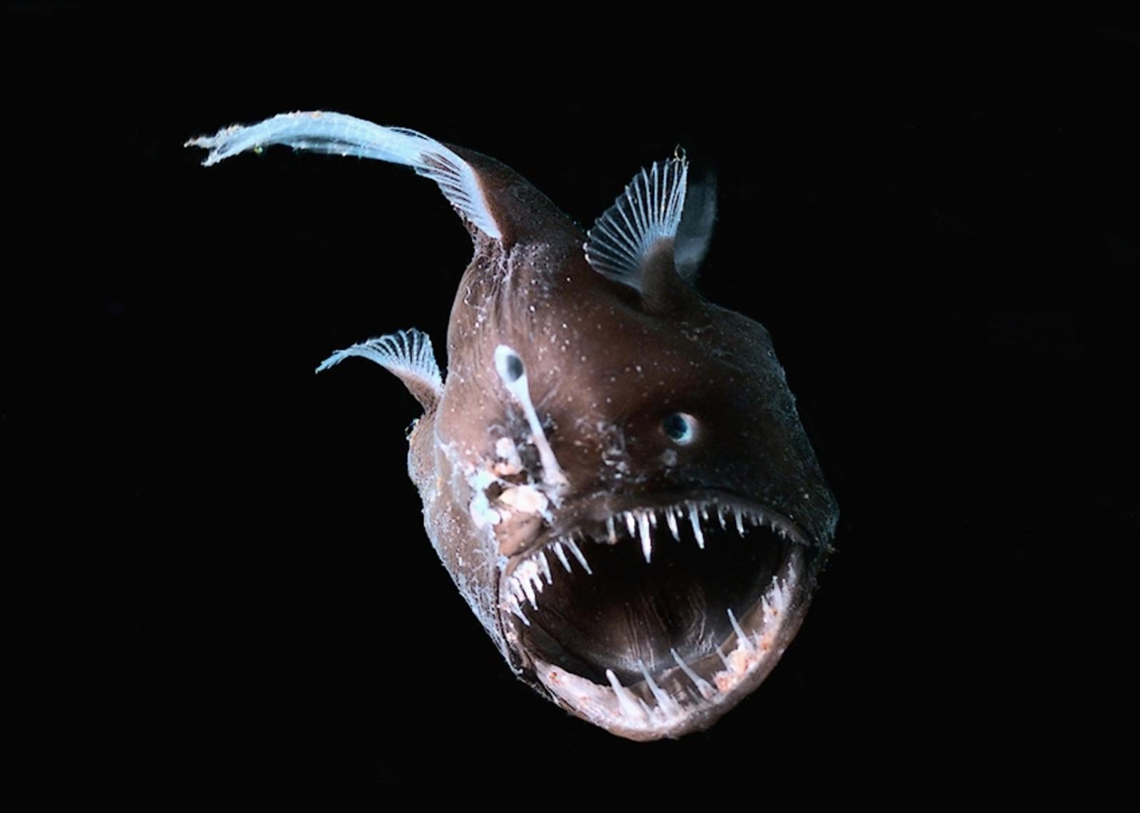 глубоководные животные фото вам поможет допустить