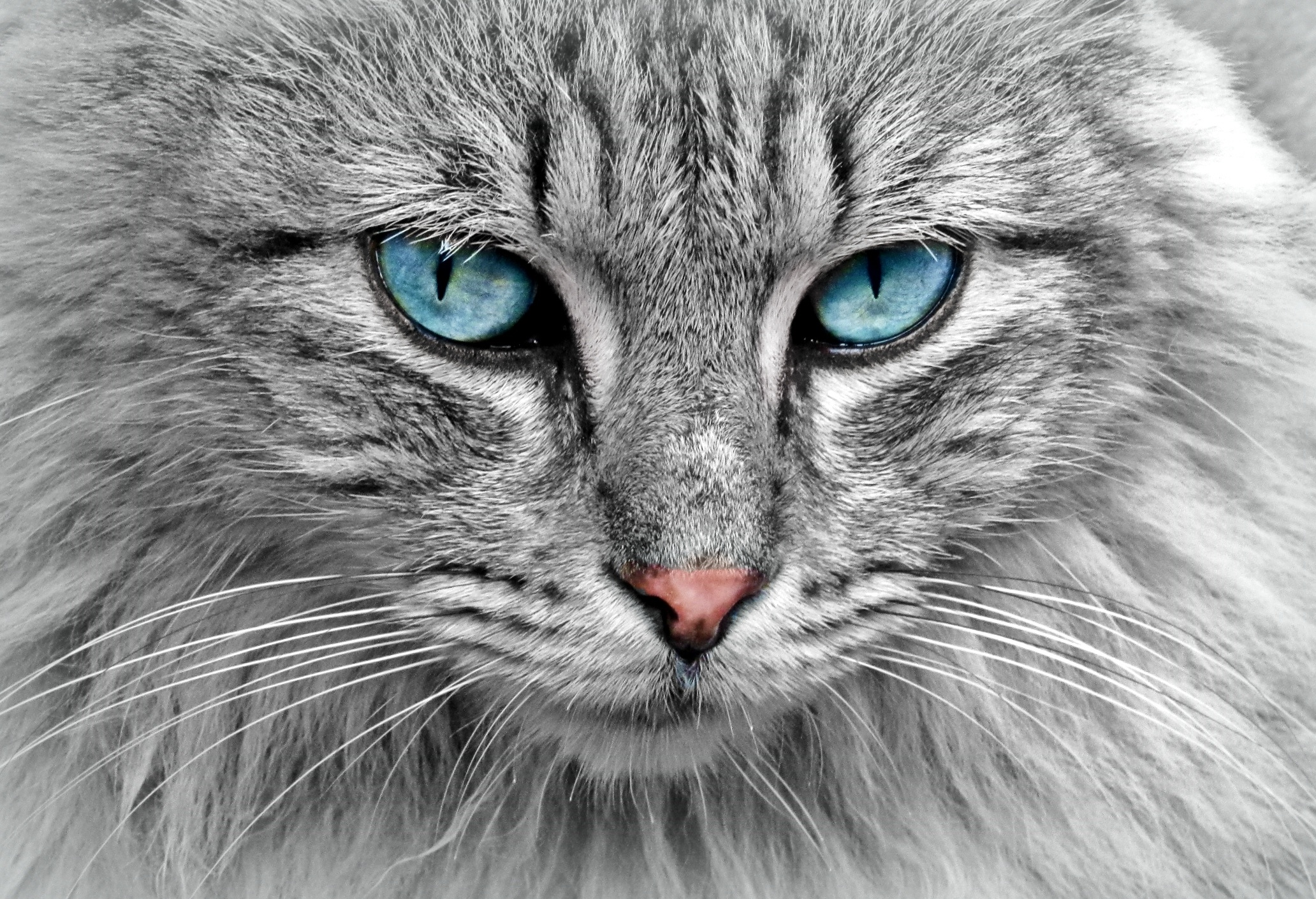 Nice Images Collection: Animal Desktop Wallpapers