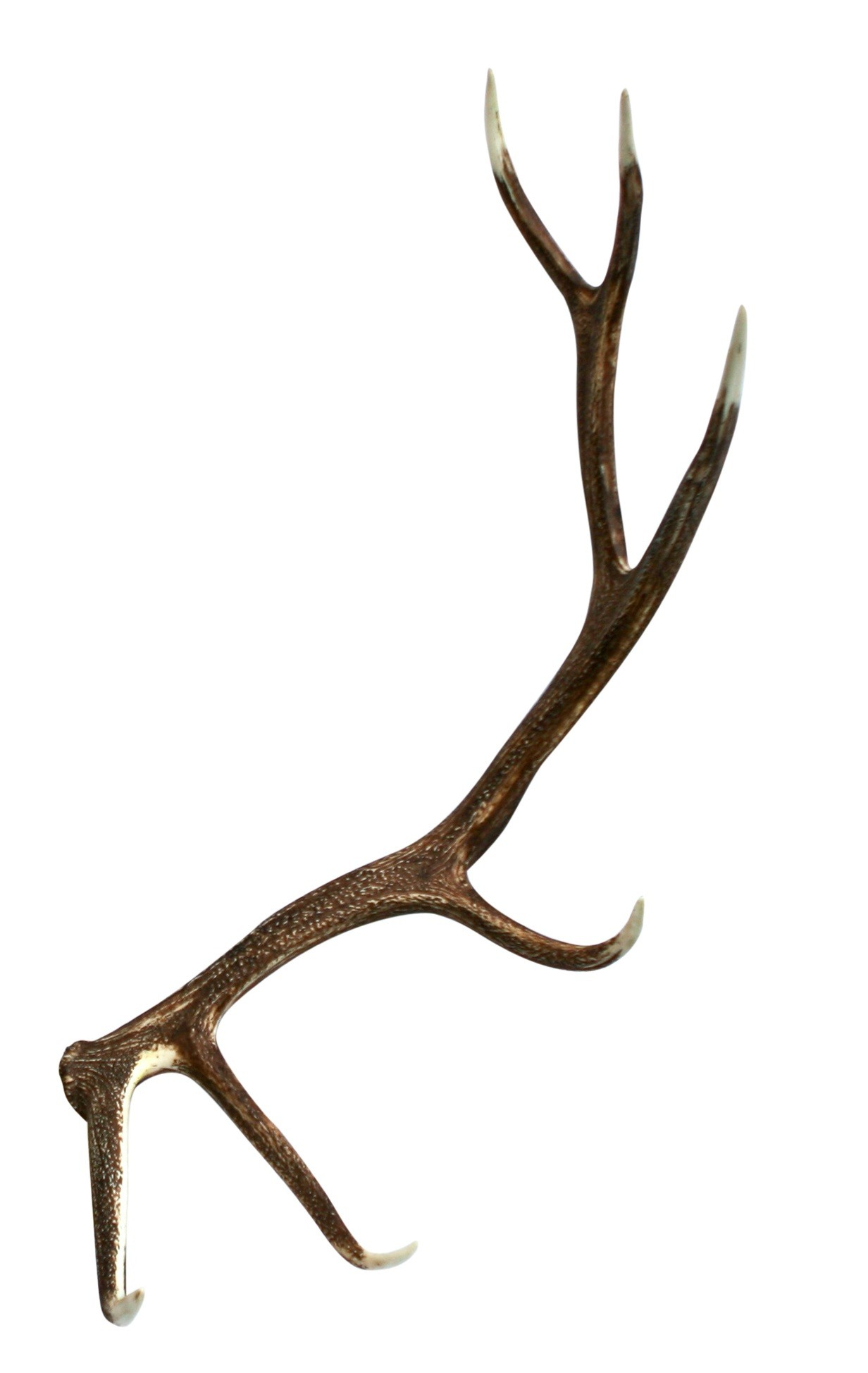 Antler Backgrounds, Compatible - PC, Mobile, Gadgets| 1232x1948 px