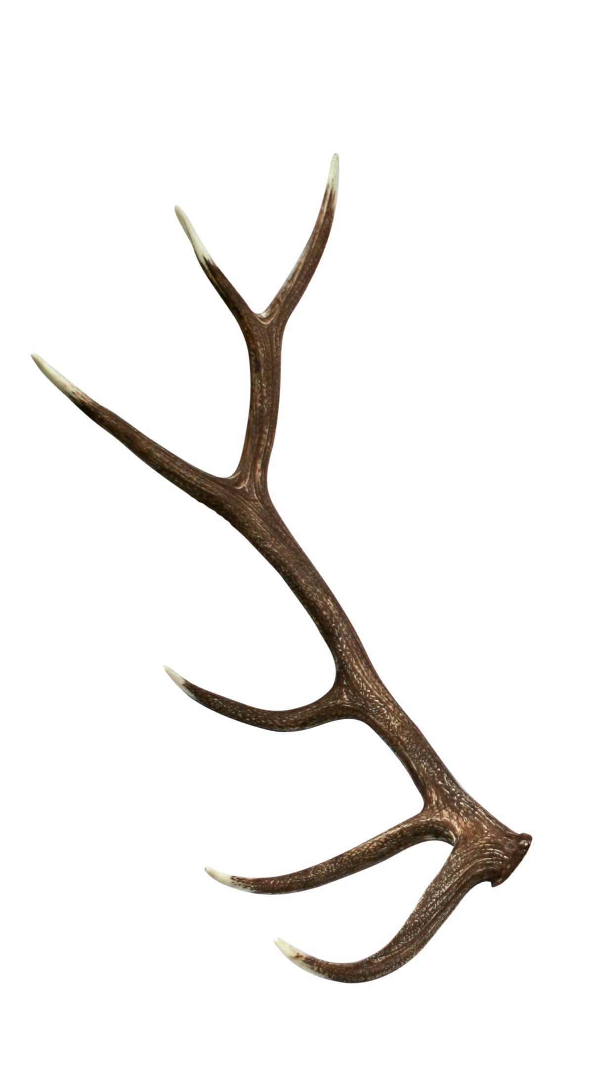 Nice wallpapers Antler 1196x2172px
