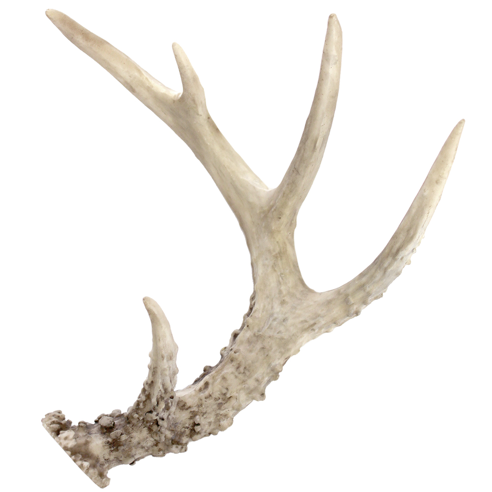 Antler Pics, Photography Collection