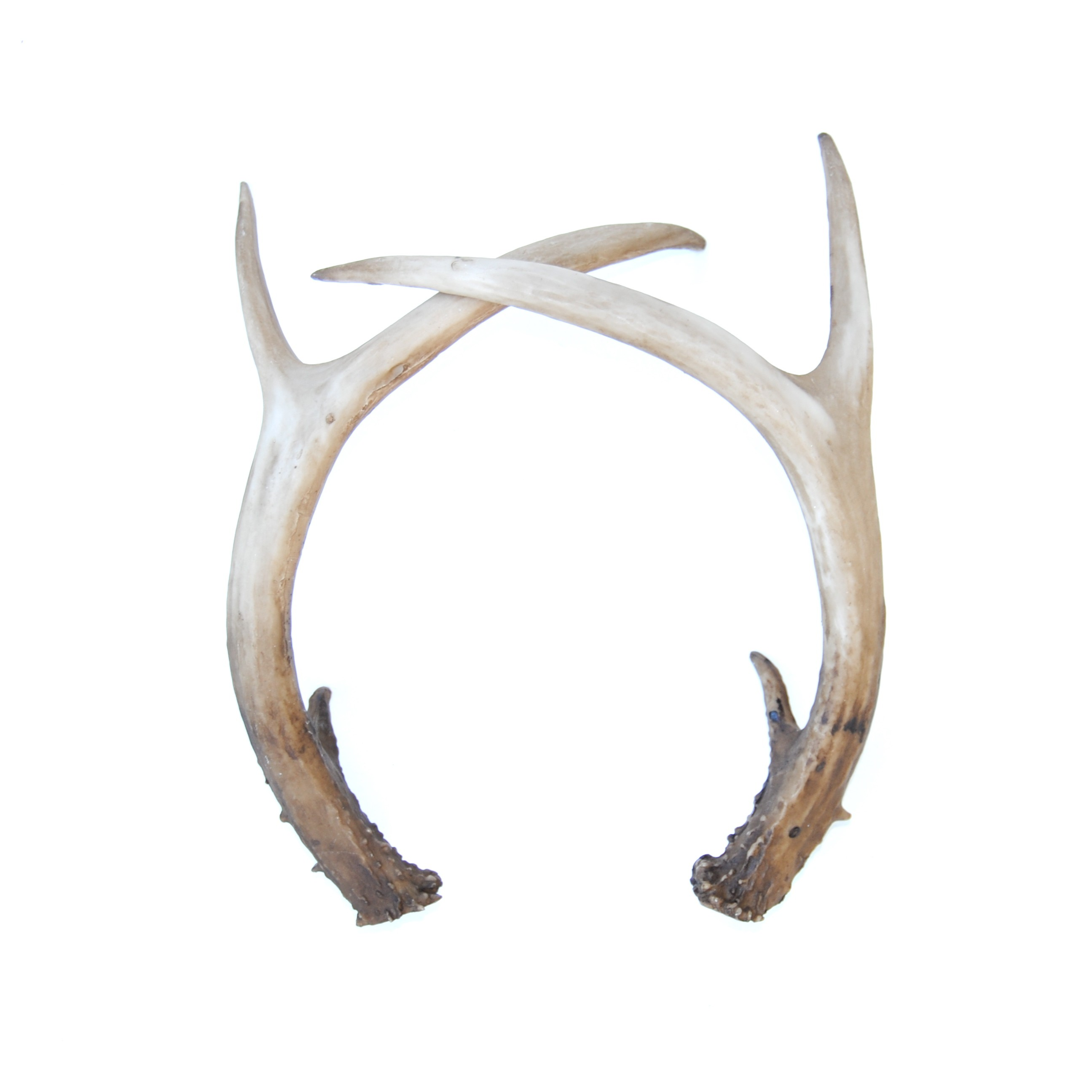 Nice wallpapers Antler 2591x2592px