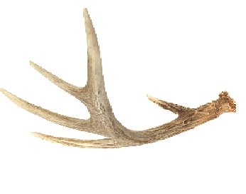 HQ Antler Wallpapers | File 13.74Kb