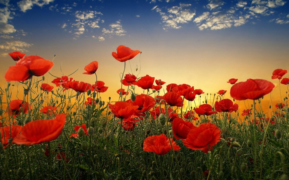 Amazing Anzac Day Pictures & Backgrounds
