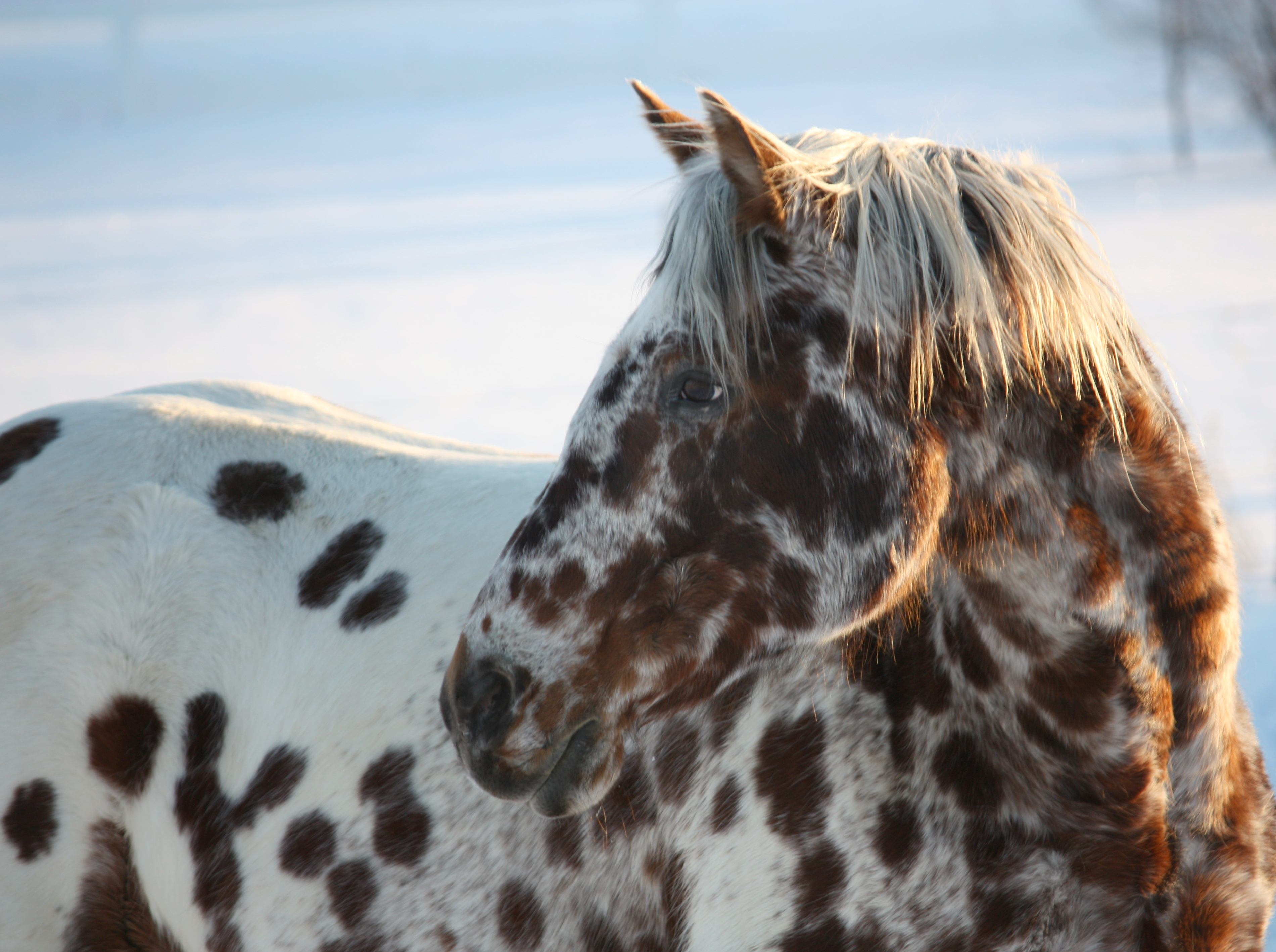 Appaloosa Wallpapers Movie Hq Appaloosa Pictures 4k Wallpapers 2019