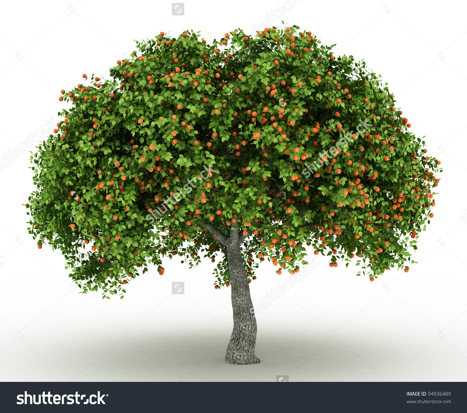 HQ Apricot Tree Wallpapers   File 963.72Kb