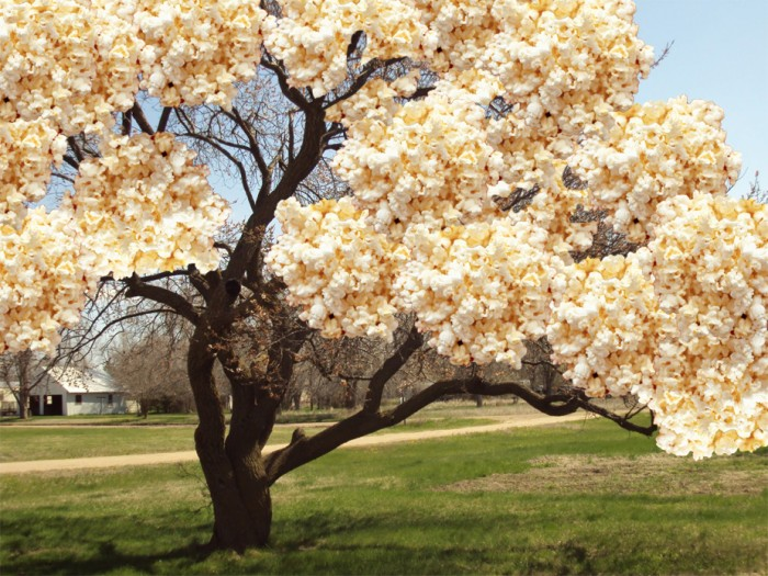 700x525 > Apricot Tree Wallpapers