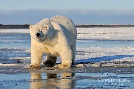 HQ Arctic Alaska Wallpapers | File 41.96Kb