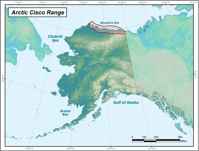 Nice Images Collection: Arctic Alaska Desktop Wallpapers