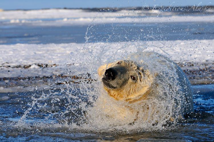 Arctic Alaska Pics, Artistic Collection