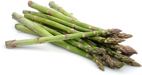Images of Asparagus | 500x264