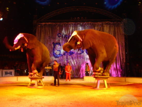 Images of At The Circus | 550x413