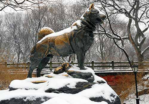 Amazing Balto Pictures & Backgrounds