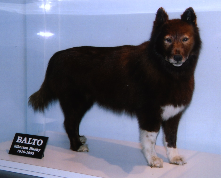 Images of Balto | 939x755