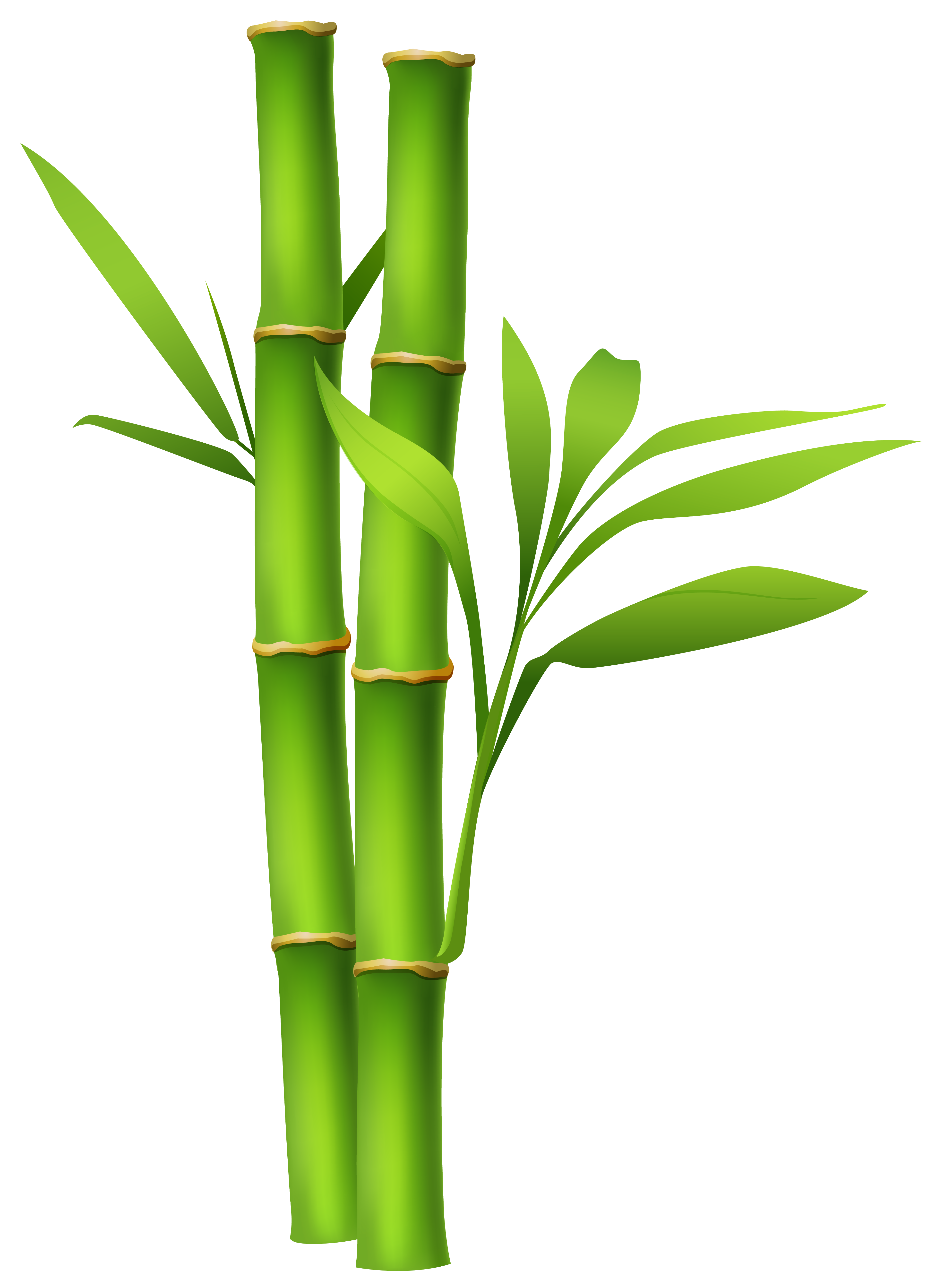 Bamboo Backgrounds, Compatible - PC, Mobile, Gadgets| 3849x5302 px