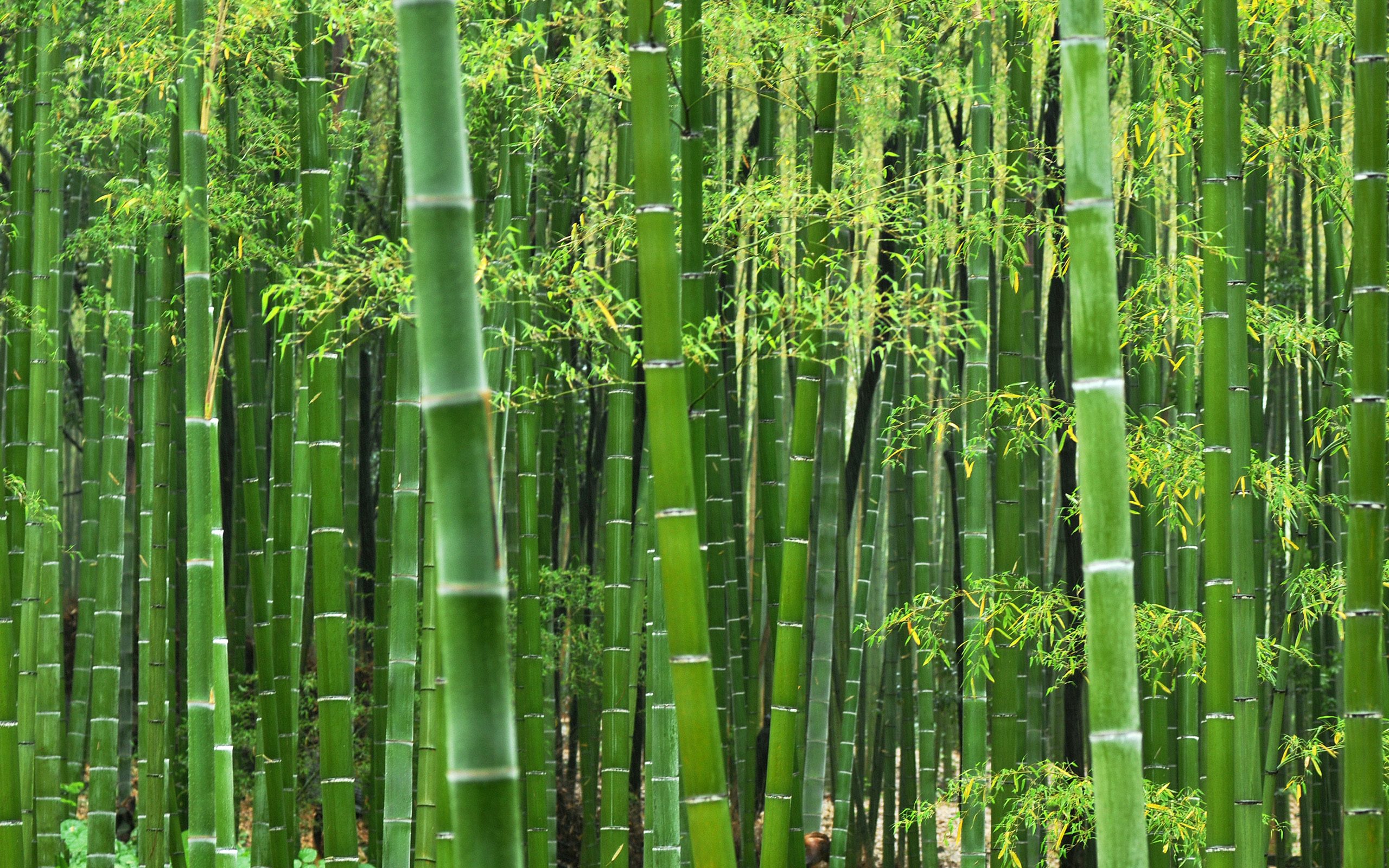 Bamboo HD wallpapers, Desktop wallpaper - most viewed