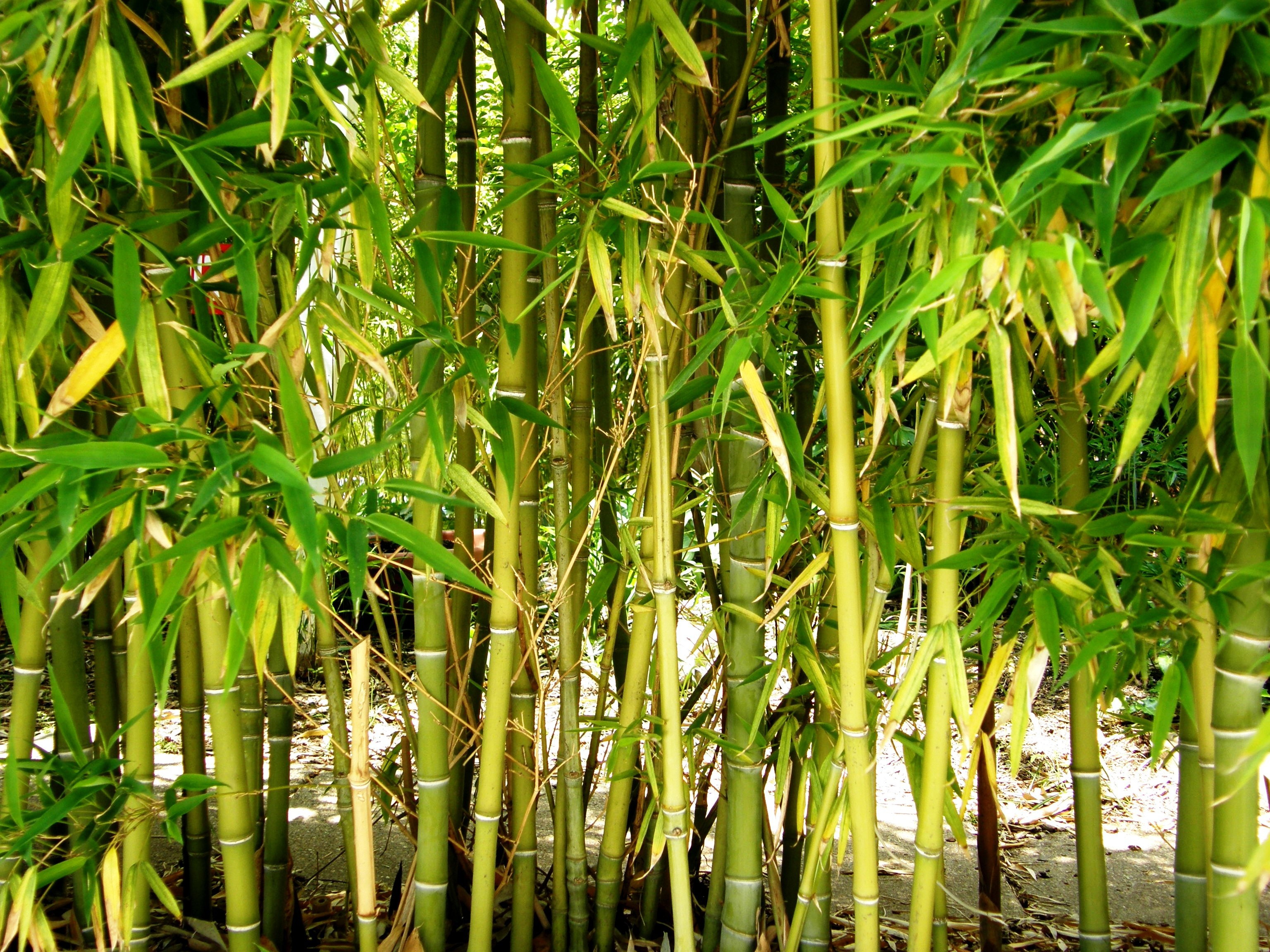 HD Quality Wallpaper | Collection: Earth, 3072x2304 Bamboo