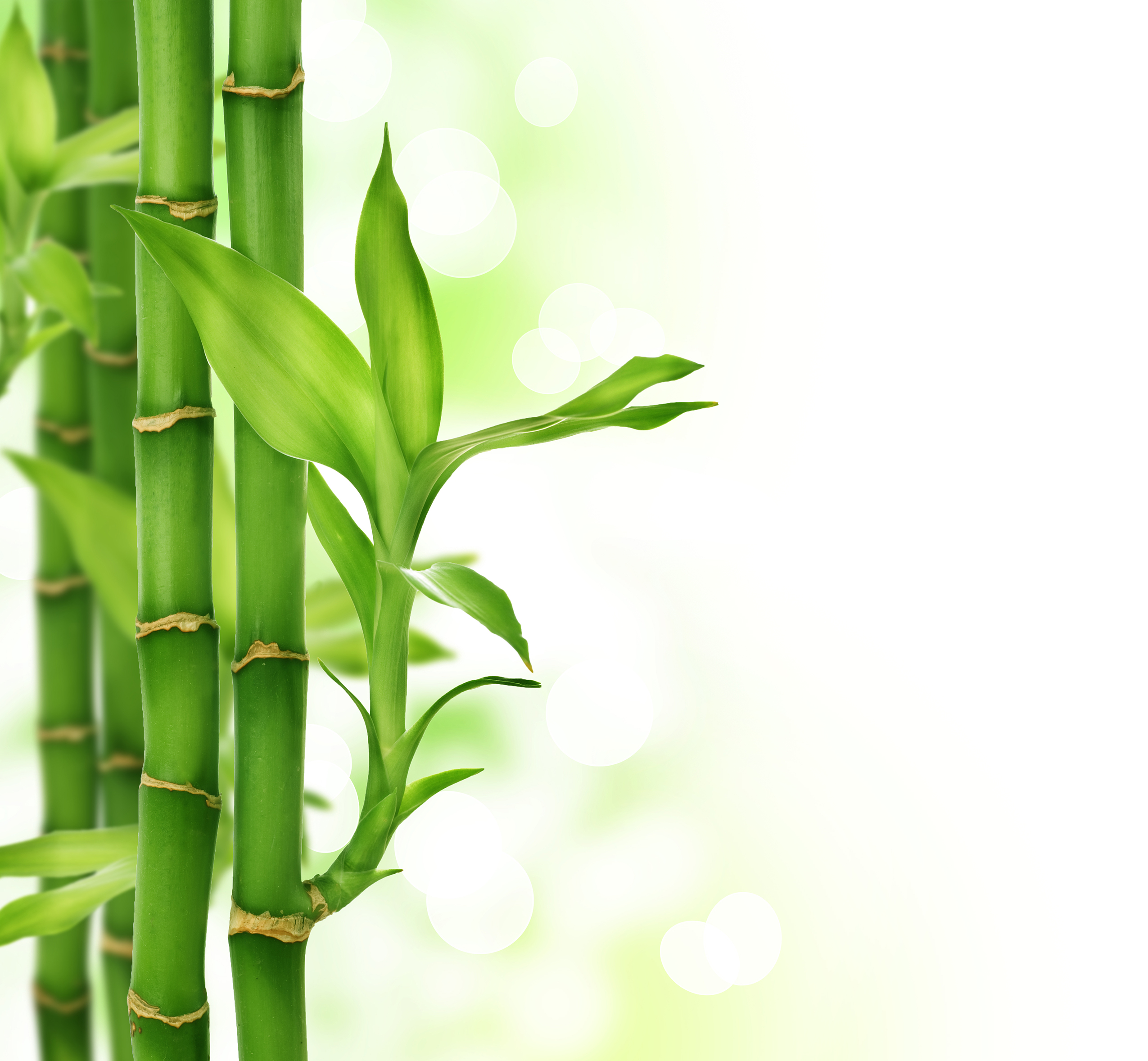 2550x2357 > Bamboo Wallpapers
