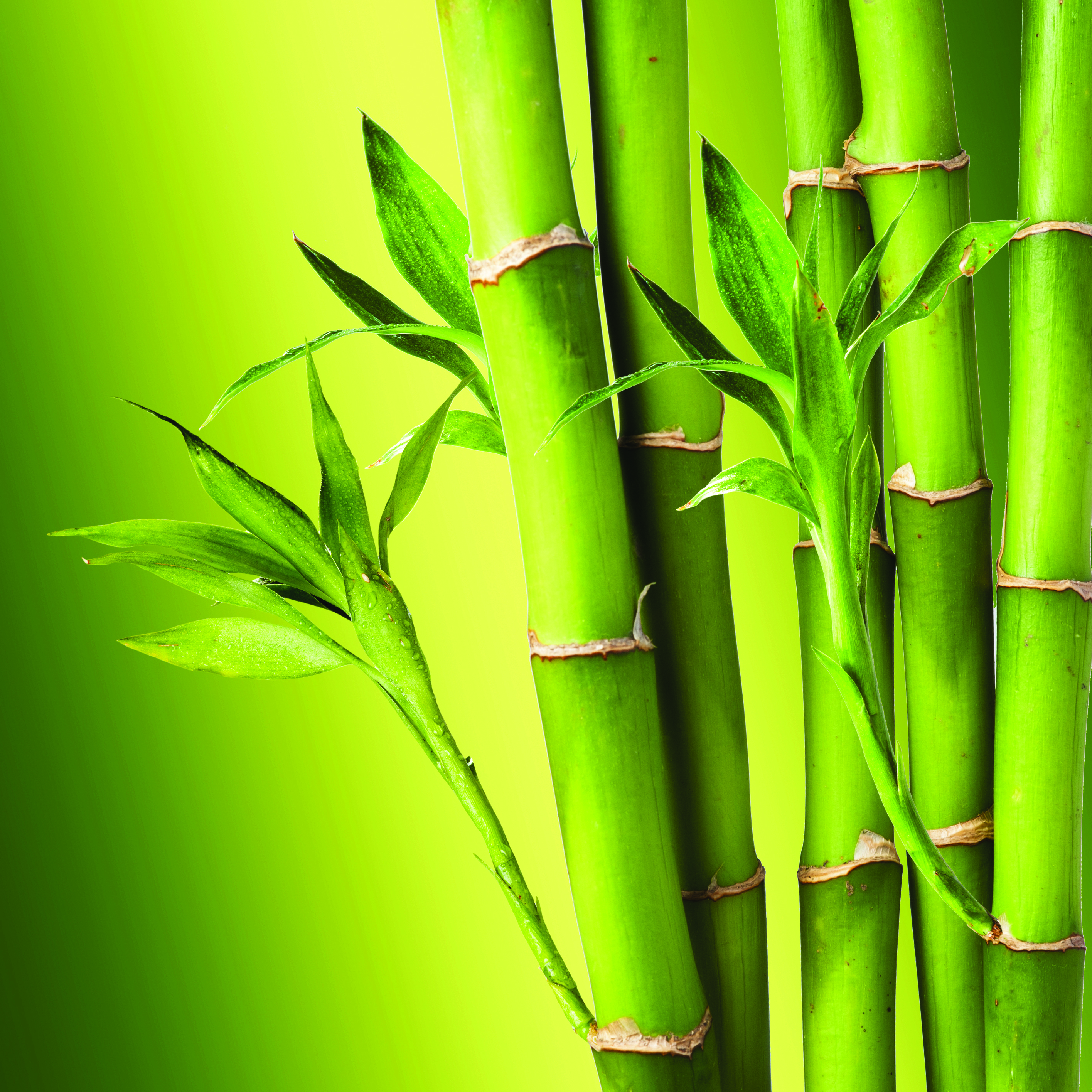 Bamboo Backgrounds, Compatible - PC, Mobile, Gadgets| 2832x2832 px