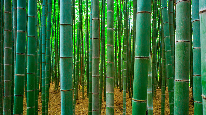 Nice Images Collection: Bamboo Desktop Wallpapers