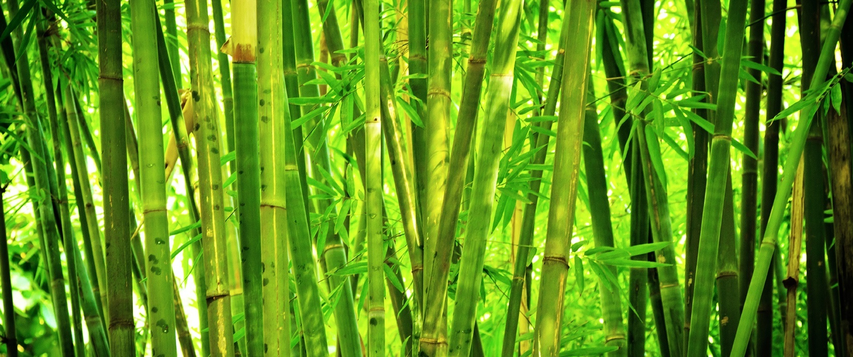 HQ Bamboo Wallpapers | File 474.19Kb