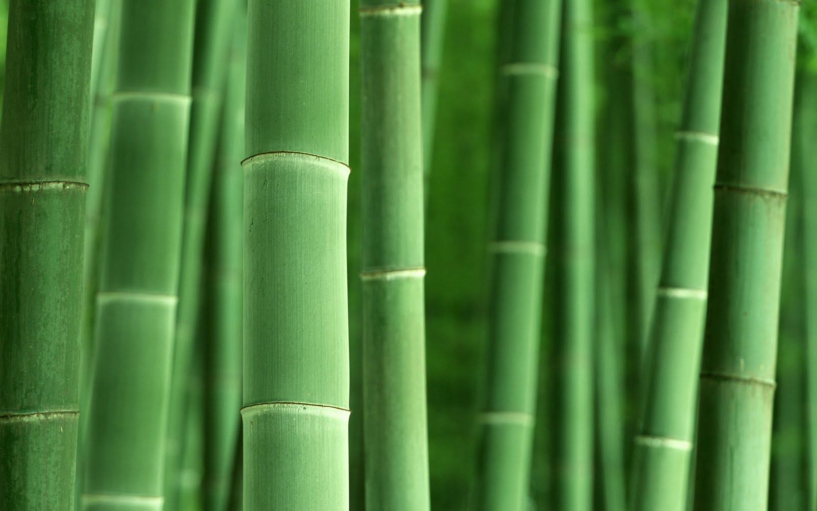 HQ Bamboo Wallpapers | File 106.85Kb