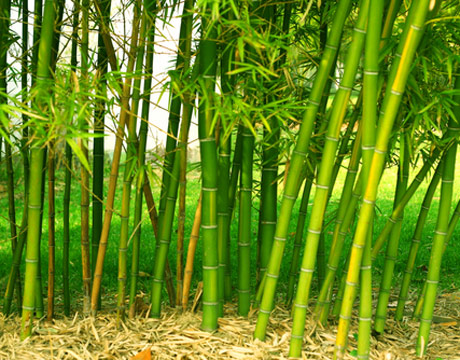 Bamboo Pics, Earth Collection
