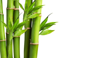 Amazing Bamboo Pictures & Backgrounds