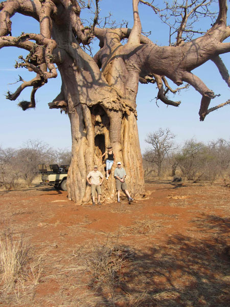 HD Quality Wallpaper | Collection: Earth, 450x600 Baobab Tree