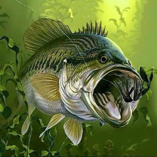 Bass Wallpapers Music Hq Bass Pictures 4k Wallpapers 2019