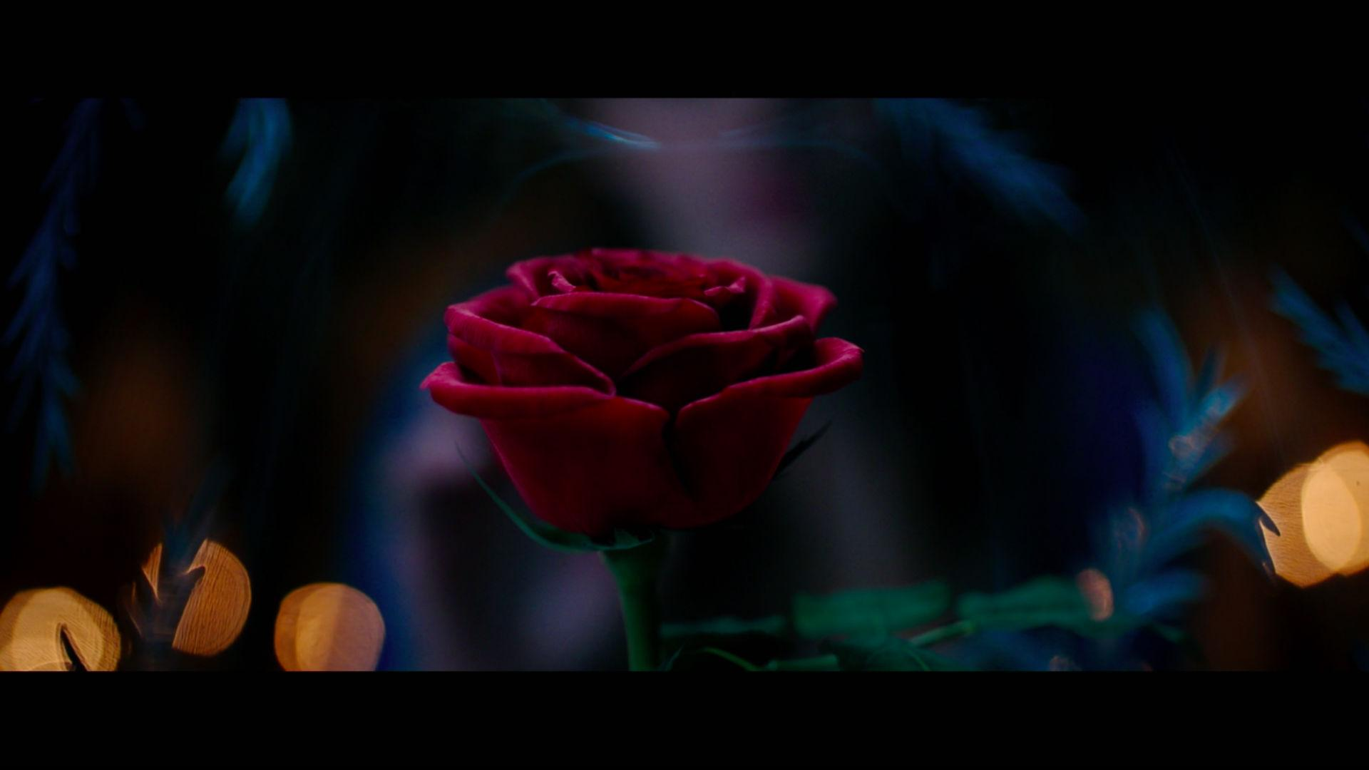 Amazing Beauty And The Beast (2017) Pictures & Backgrounds