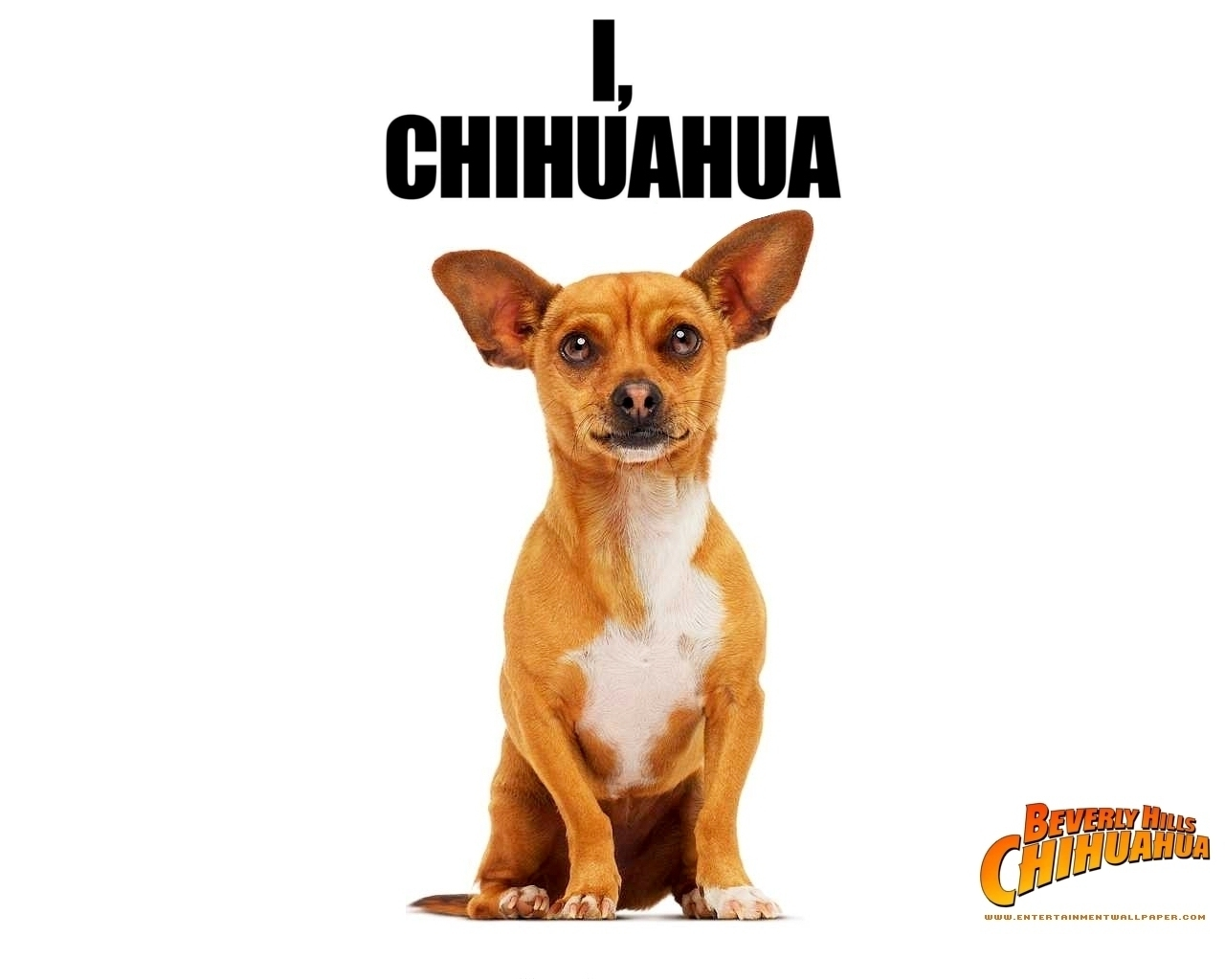 HD Quality Wallpaper | Collection: Movie, 1280x1024 Beverly Hills Chihuahua