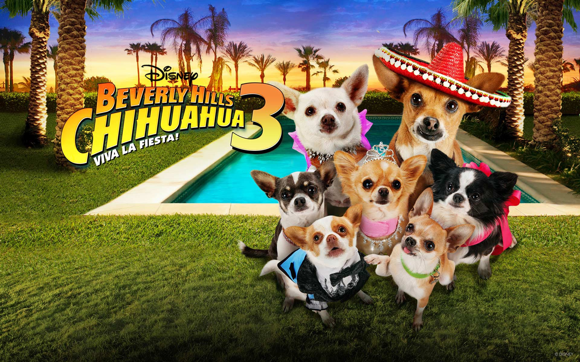 Nice wallpapers Beverly Hills Chihuahua 1920x1200px