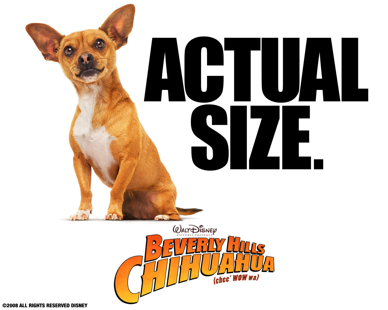 Images of Beverly Hills Chihuahua | 1280x1024