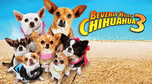 Beverly Hills Chihuahua Backgrounds on Wallpapers Vista