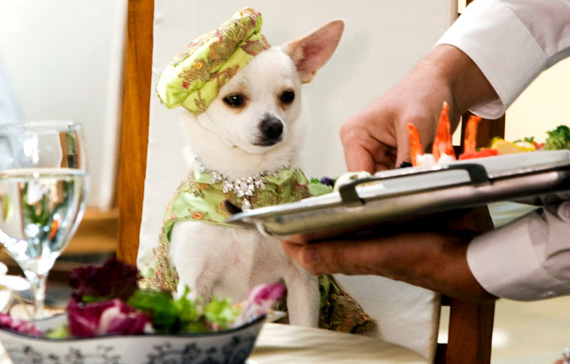 HD Quality Wallpaper | Collection: Movie, 570x364 Beverly Hills Chihuahua