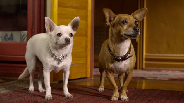 Beverly Hills Chihuahua High Quality Background on Wallpapers Vista