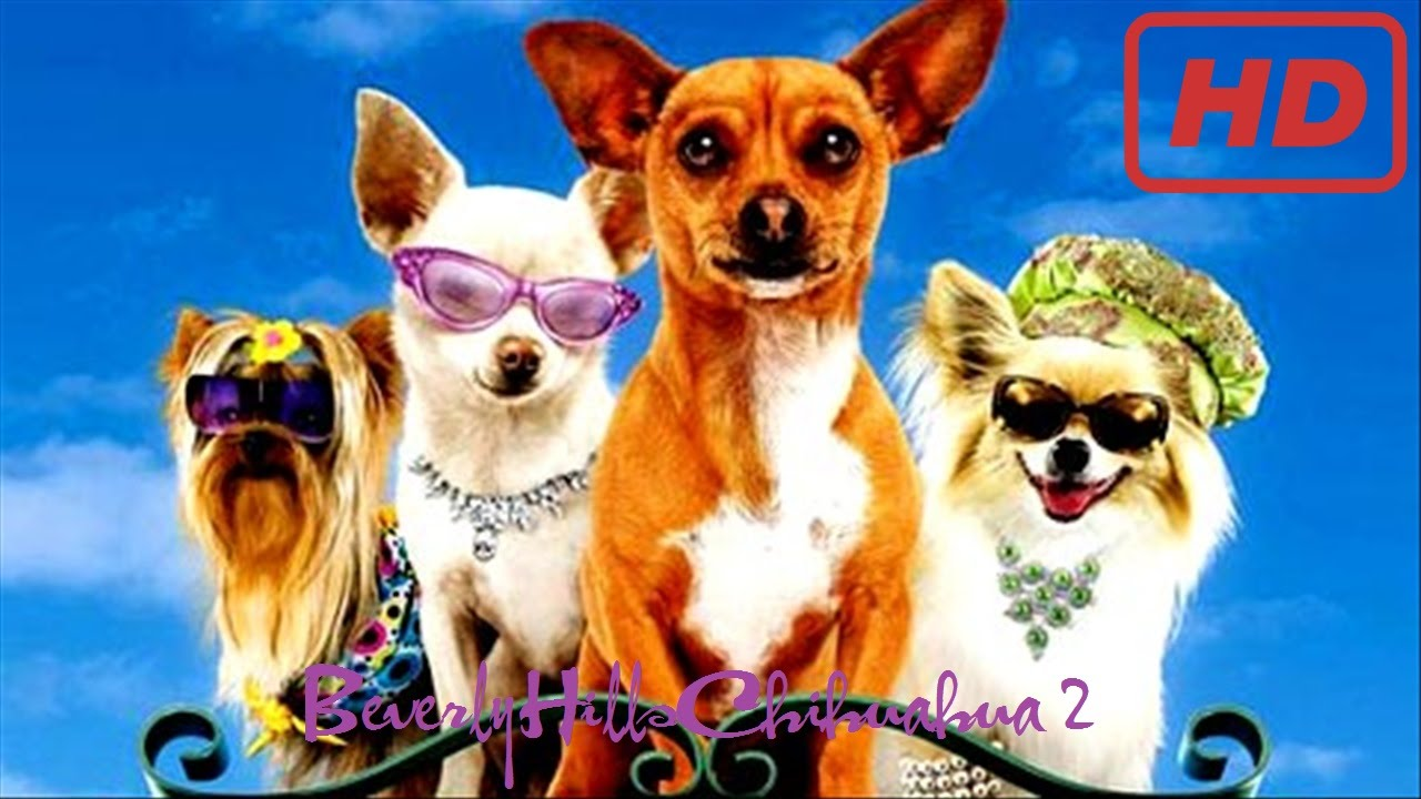 Amazing Beverly Hills Chihuahua Pictures & Backgrounds