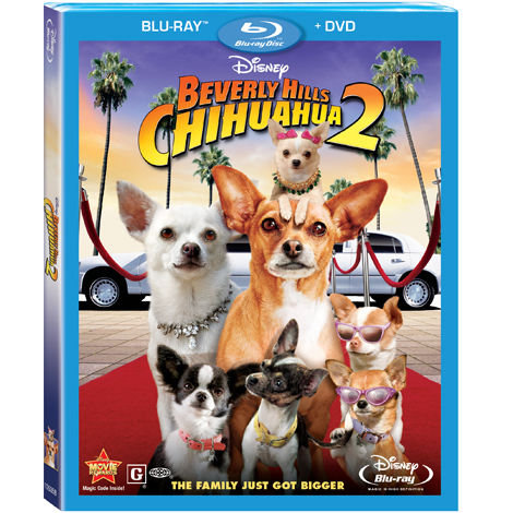 HD Quality Wallpaper | Collection: Movie, 470x470 Beverly Hills Chihuahua