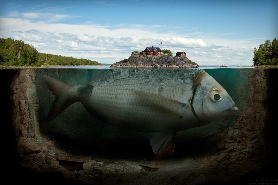 Big Fish Pics, Movie Collection