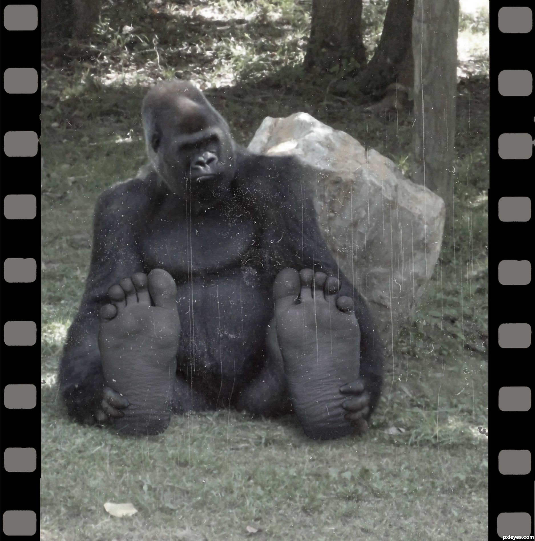 Big Foot Pics, Photography Collection